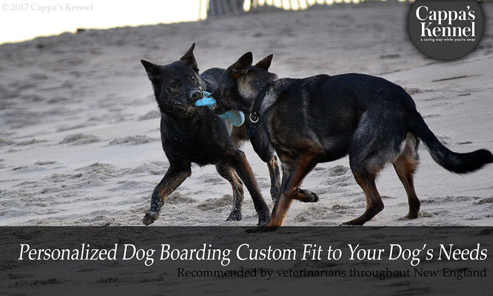Personalized Dog Boarding Custom Fit to your Dog's Needs