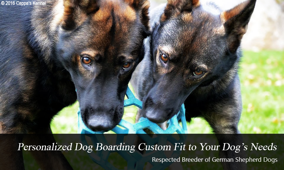 Dog Boarding and German Shepherds