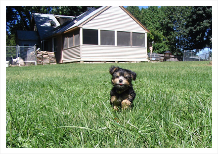 Dog Boarding Kennel in New Hampshire