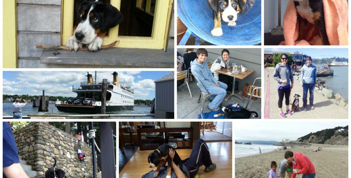 San Francisco Dog Kennel Boarding