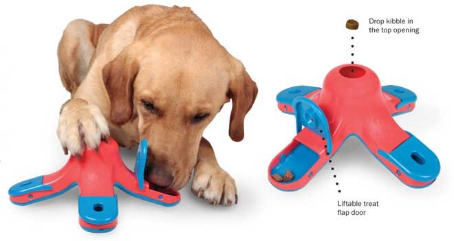 Toys For Anxiety : Dog separation anxiety boredom tips toys cappa s